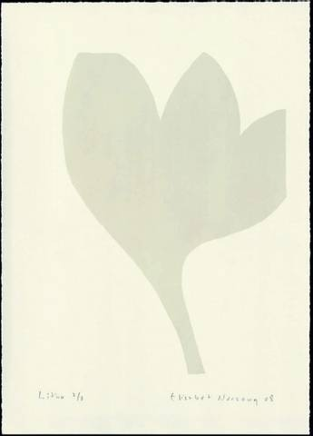 Bilde av Hvit blomst av Elisabet Norseng