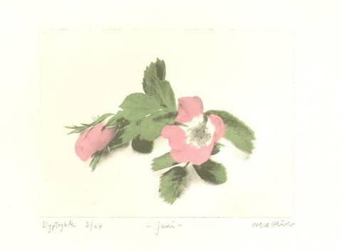 Bilde av Juni av Marie-Ann Mürer (liten)